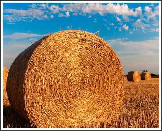 Expertise en droit agricole